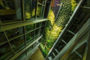 دیوار سبز ؛ فرصتی برای طبیعت گرایی در ساز و کار شهری