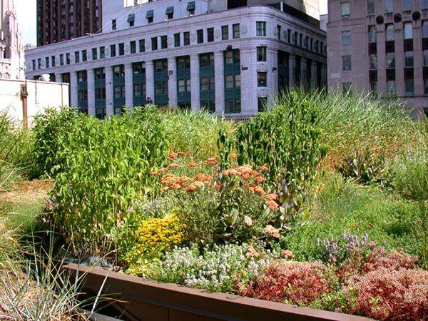 بام سبز ساختمان شهرداری ؛ جنگل بتنی شیکاگو سبز تر میشود!