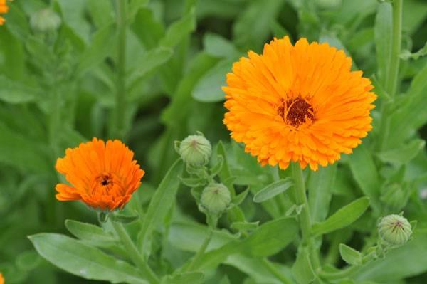 معرفی گیاه های مناسب برای ایجاد شهر دوستدار زنبور عسل