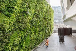 بزرگ ترین دیوار سبز در موزه هنر مدرن سانفرانسیسکو