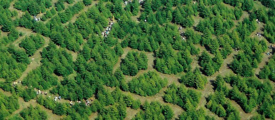 هزارتو های جادویی ؛ معرفی لابیرنت های معروف جهان