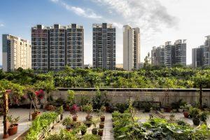 نقش کشاورزی شهری در شکل گیری شهر پایدار